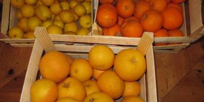Zitrusfrüchte aus Sizilien sind verteilt!